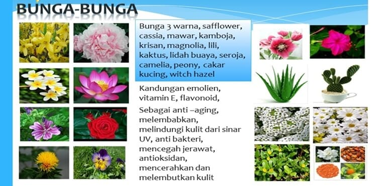 jenis-jenis bunga yang terkandung didalam black jam original raw