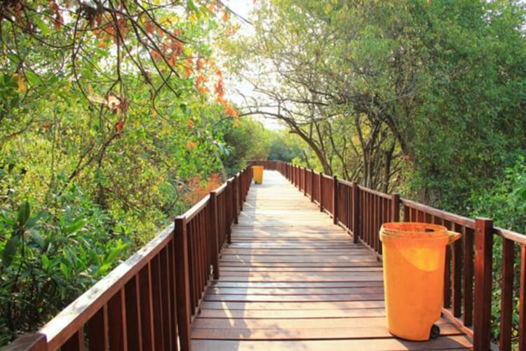 hutan mangrove wonorejo, destinasi wisata surabaya bernuansa alam