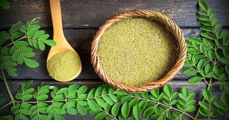 manfaat daun kelor dan hubungannya dengan obat asam urat mosehat