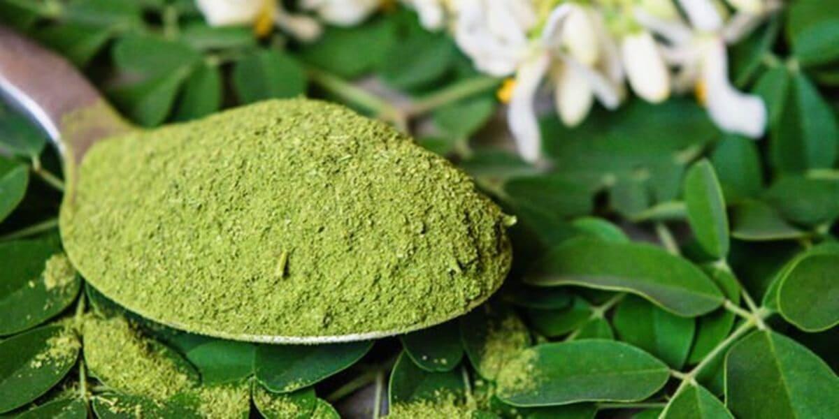 pengertian daun kelor dan hubungannya dengan obat asam urat mosehat