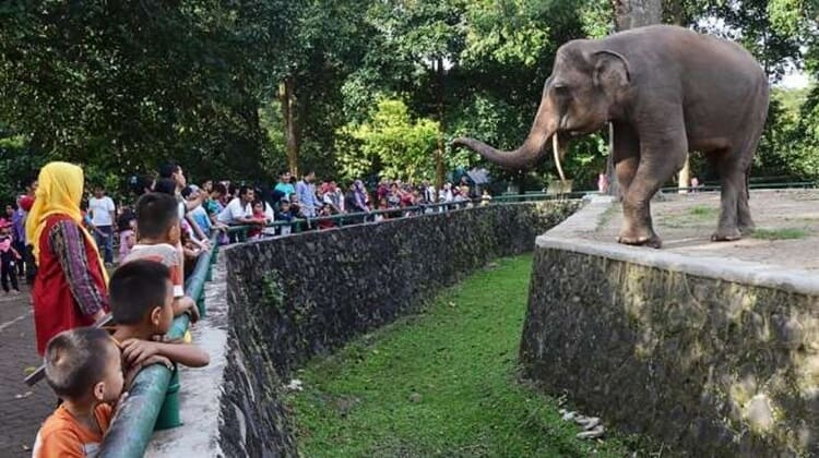kebun binatang ragunan, objek wisata jakarta selatan