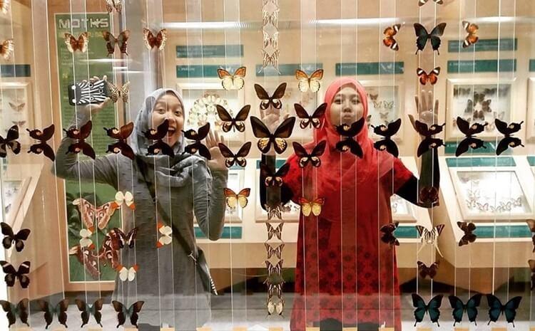 museum serangga dan taman kupu kupu, tempat wisata jakarta timur