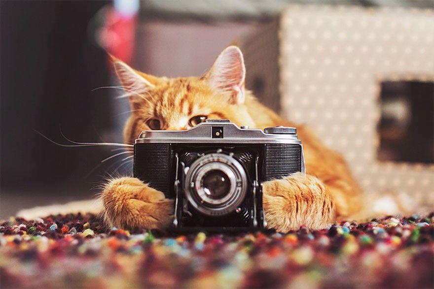 ide bisnis freelancer fotografer profesional terbaik di indonesia