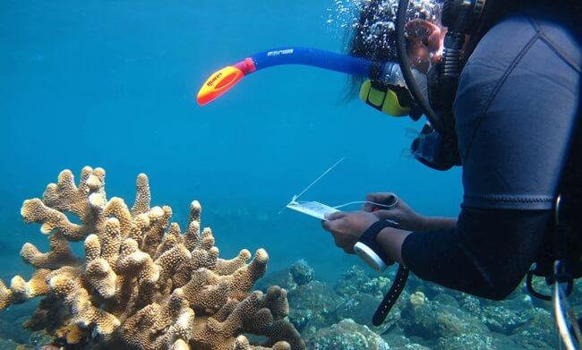 konservasi karang jeruk dan rumah wayang dan tempat wisata di tegal yang populer, menarik, keren dan instagrammable