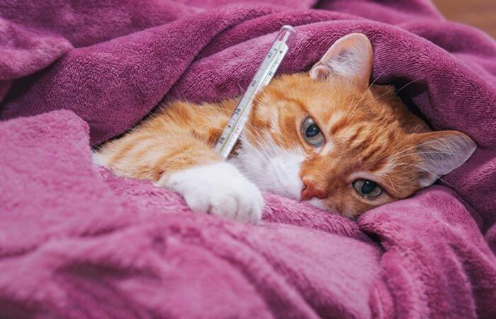 penyebab dan cara mengatasi kucing tidak mau makan