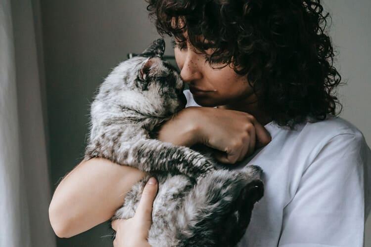 cara merawat kucing persia