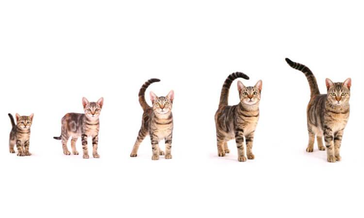 susu kucing terbaik