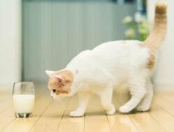 10 Daftar Merk Susu Kucing Terbaik No. 1 di Indonesia 2021
