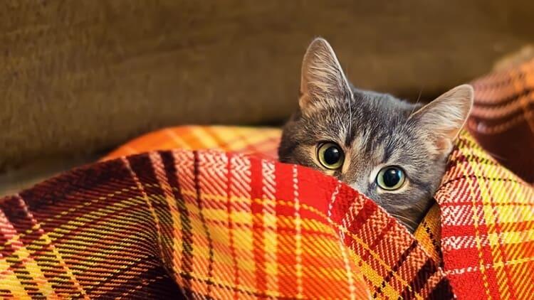penyebab kucing tidur terus dan cara mengatasinya