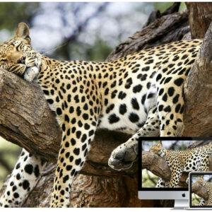 30+ Amazing Wildlife and Animal Wallpapers